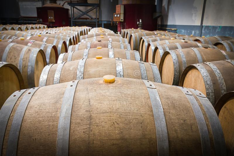 Barilotti di vino nella cantina della cantina immagini stock libere da diritti