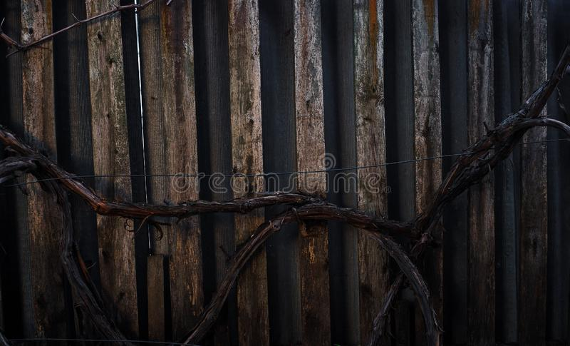 Barilotto dell'uva sui precedenti di un recinto di legno fotografia stock libera da diritti