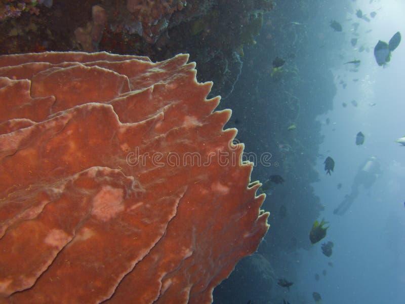 Barilotto Sponge1 immagine stock
