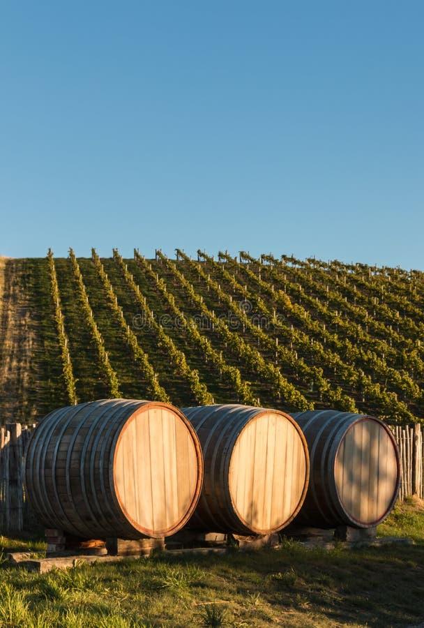 Barils de vin dans le vignoble avec l'espace de copie photographie stock libre de droits