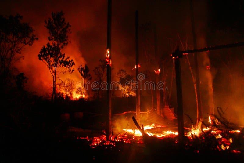 Bario Bush Fire Casualty #3 Free Public Domain Cc0 Image