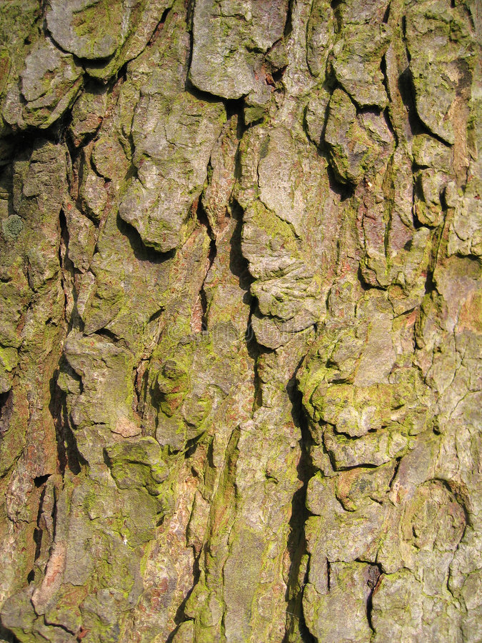 Download Bark stock image. Image of bark, moss, cracked, abstract - 100623