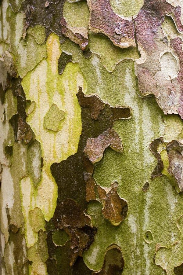 Bark Stock Image