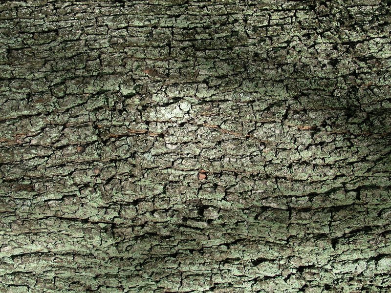 Download Bark stock photo. Image of brown, bark, tree, nature, abstract - 153408