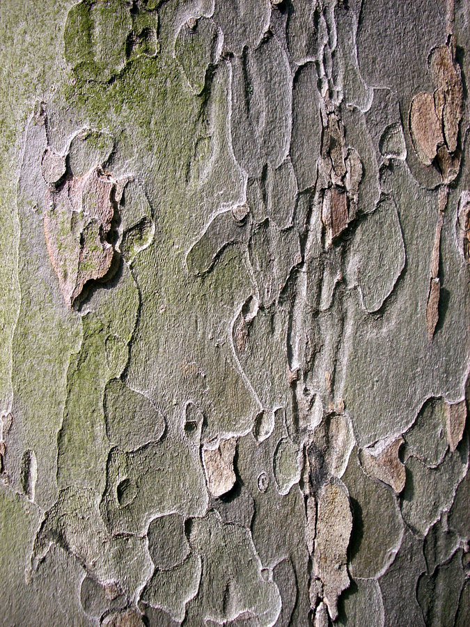 Download Bark stock image. Image of tree, plant, texture, wood, material - 239381