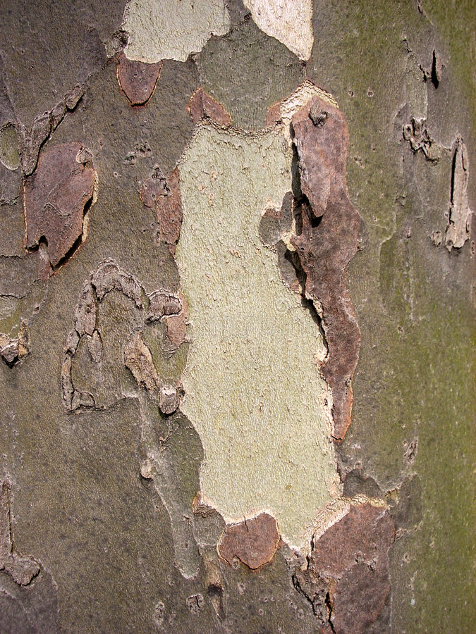 Download Bark stock photo. Image of material, organic, background - 239382
