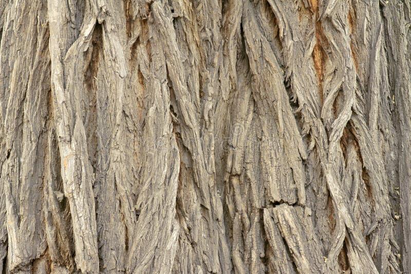 Download Bark stock photo. Image of coarse, scholar, crass, unshaped - 24745042