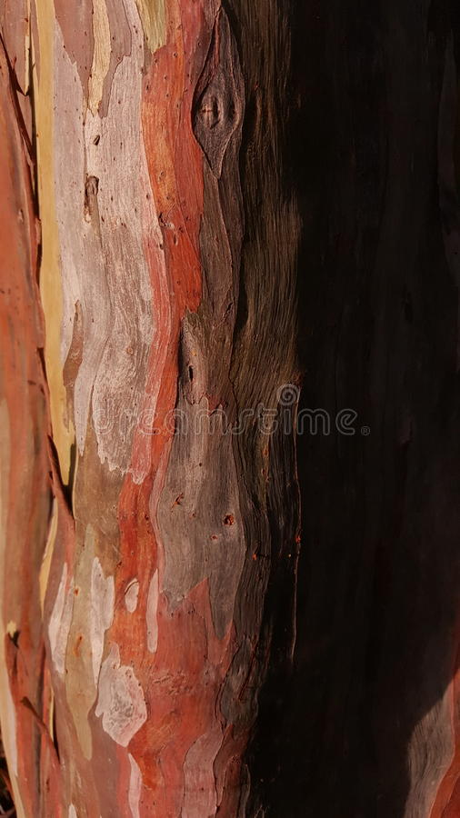 bark imagem de stock