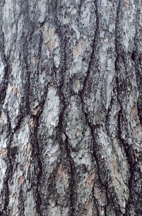 Bark stock photography