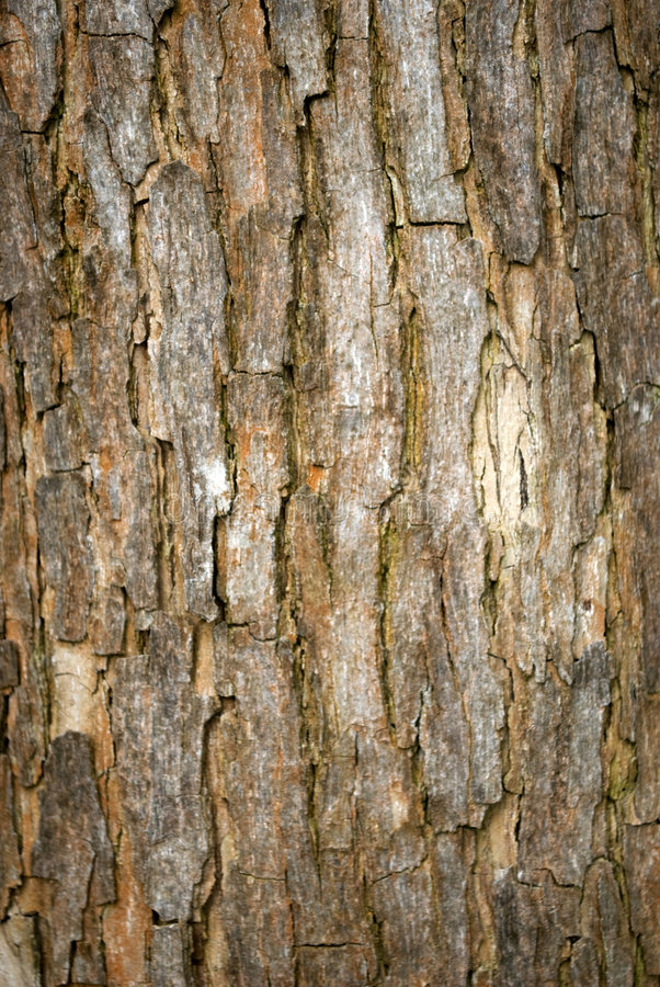 Bark. Details of an old bark stock image