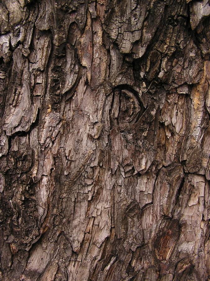 Download Bark Abstract Background Stock Image - Image: 22211