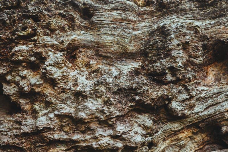 Bark Abstraction Free Public Domain Cc0 Image