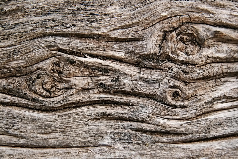 Bark Of Aged Tree Stock Image