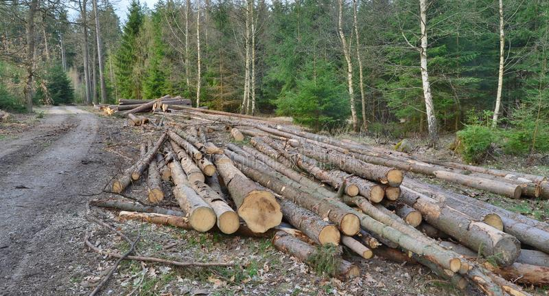Bark beetle-infected trees, timber ready for transport, South Bohemia. Czech Republic stock images