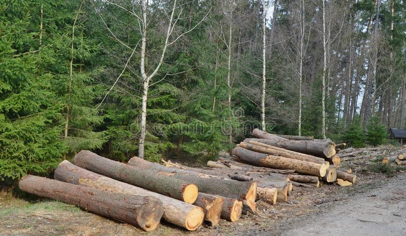 Bark beetle-infected trees, timber ready for transport, South Bohemia. Czech Republic stock photos