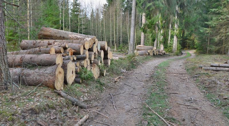 Bark beetle-infected trees, timber ready for transport, South Bohemia. Czech Republic royalty free stock photo