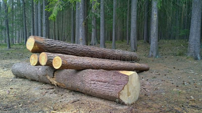 Bark beetle-infected trees, timber ready for transport, South Bohemia. Czech Republic stock photography