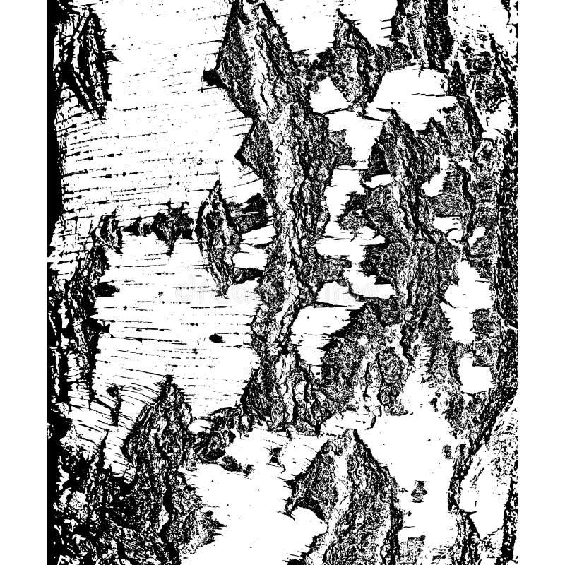 Bark of birch in the cracks texture. Vector illustration royalty free illustration
