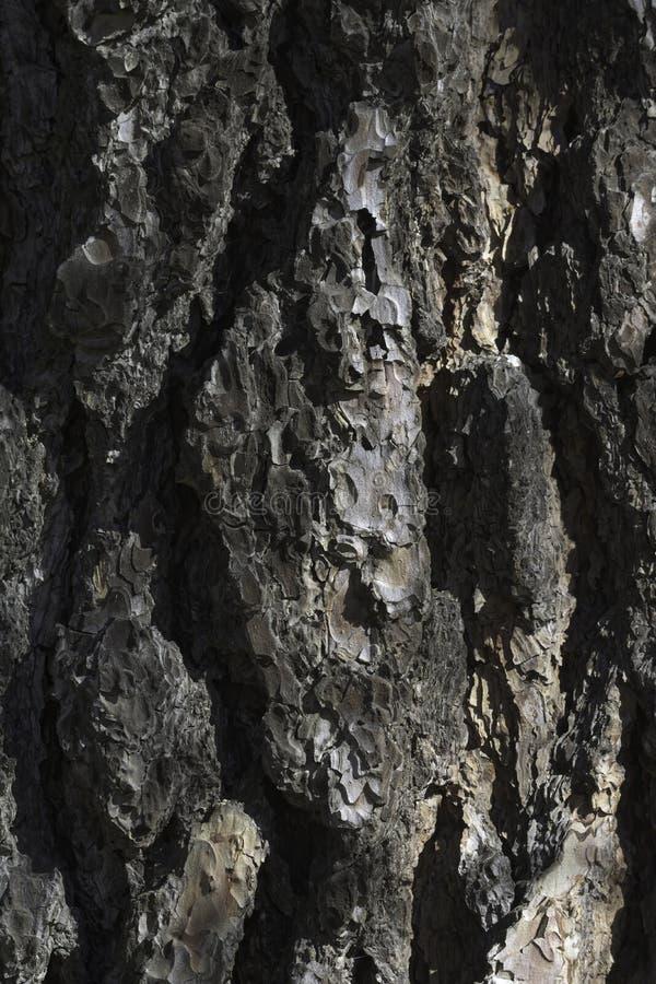 Bark Canyons lizenzfreie stockfotografie