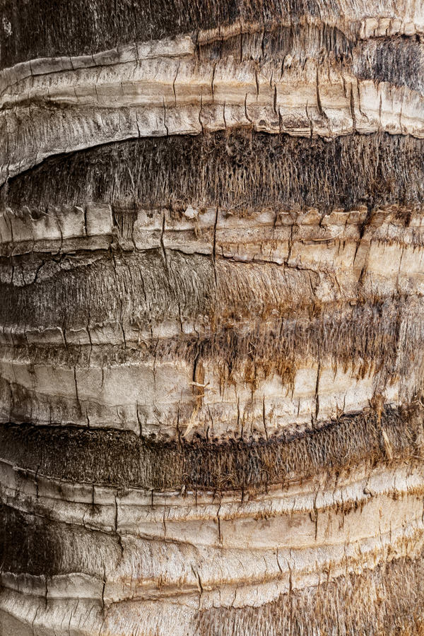 Bark of coconut palm closeup. Textural background royalty free stock photos