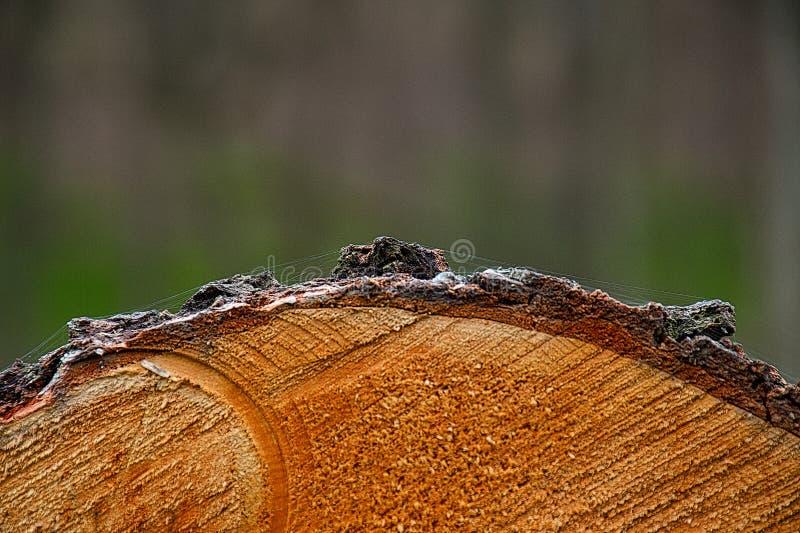Bark_cross-section_with_cobweb royalty-vrije stock foto