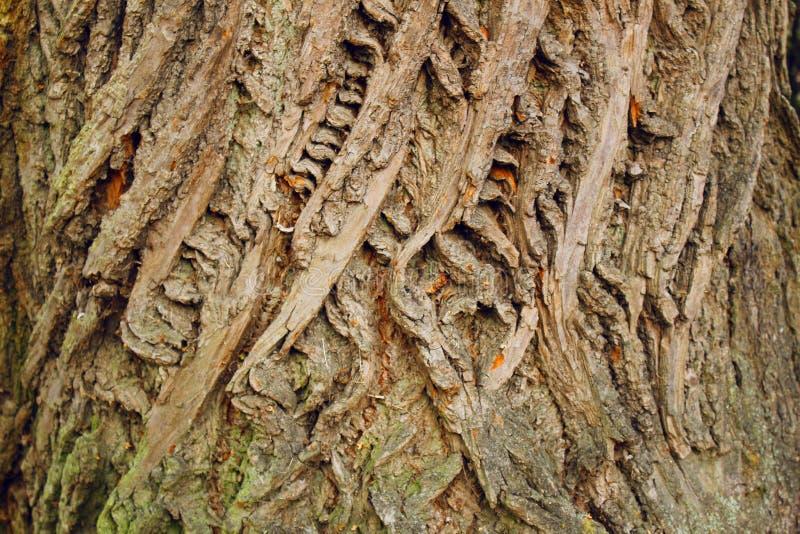 Bark da textura das árvores crosta florestal castanha de fundo fotos de stock royalty free