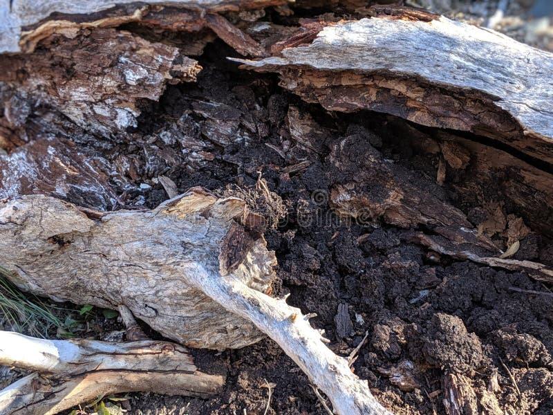Bark of fallen tree stock photos