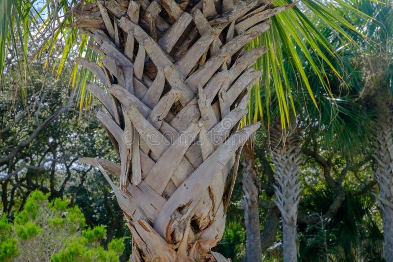 Bark on a Florida Palm tree royalty free stock photo
