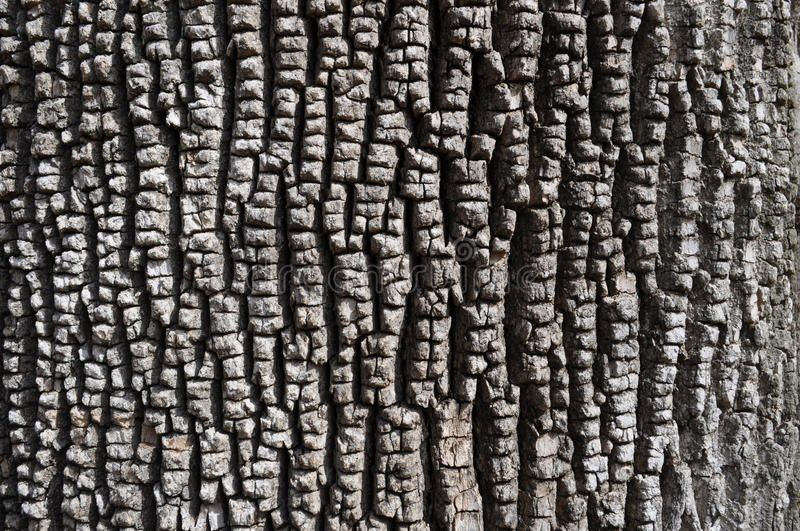 Bark of Green Ash Tree stock photos