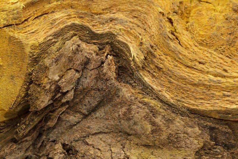 Bark of Indian Barberry (Berberis aristata). Bark of Indian Barberry or Tree Turmeric (Berberis aristata). Macro close up background texture. Top view stock photography
