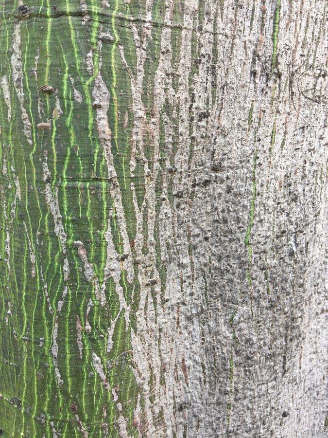 Bark of the kapok tree. Random colored kapok tree bark stock photo