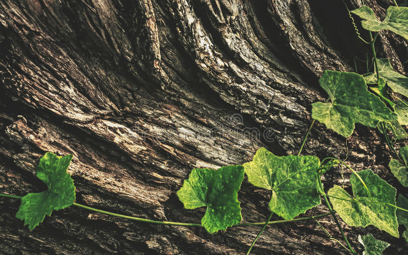 Bark and leaf royalty free stock images