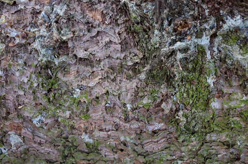 Bark with moss background royalty free stock image