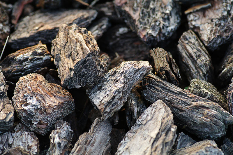 Bark mulch. A pile of brown autumn bark Mulch for background stock photo