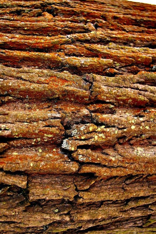 Bark of an Oak Tree stock images