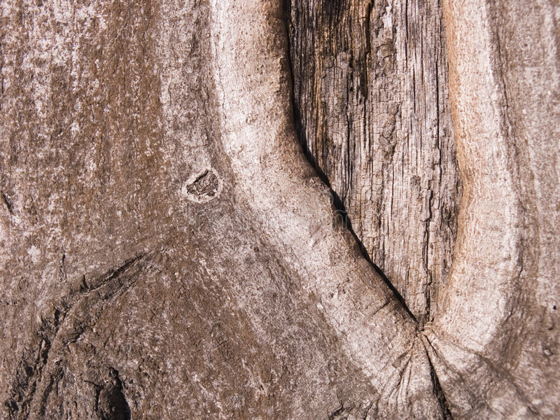 Download The bark of an Oak tree stock photo. Image of environment - 4699200
