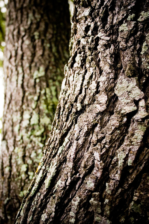 Download Bark Oak Tree stock photo. Image of sustain, tree, moss - 5138246