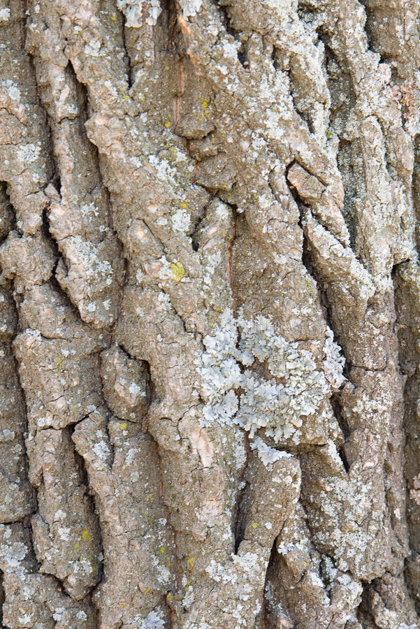 Free Bark Of A Tree A Lichen 2 Royalty Free Stock Photography - 4963897