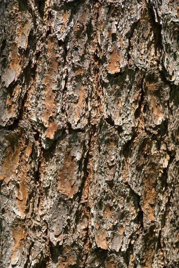 Free Bark Of Pine 2 Stock Photo - 9714120
