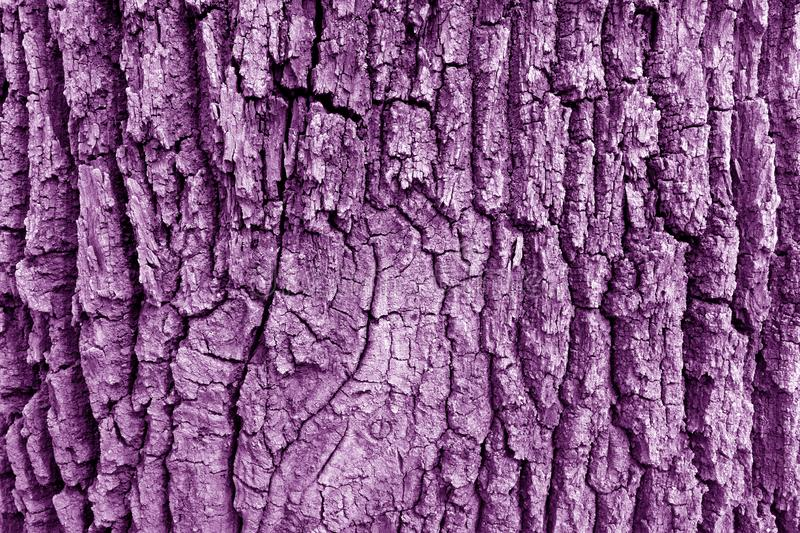 Bark of old big oak tree texture in purple tone stock images