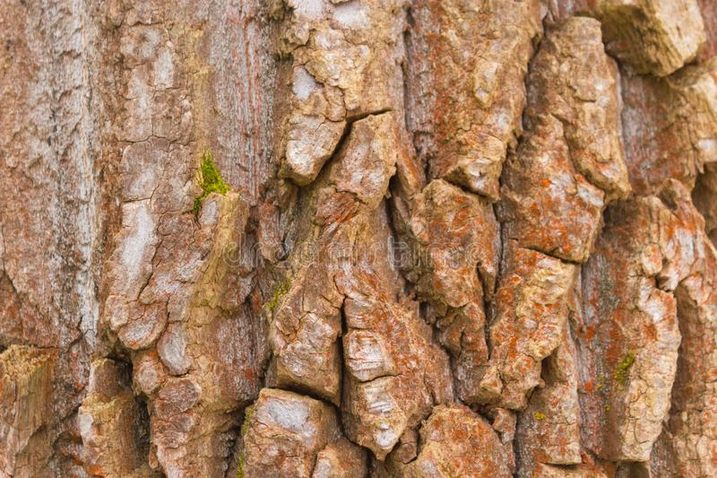 Bark of an old tree royalty free stock photography