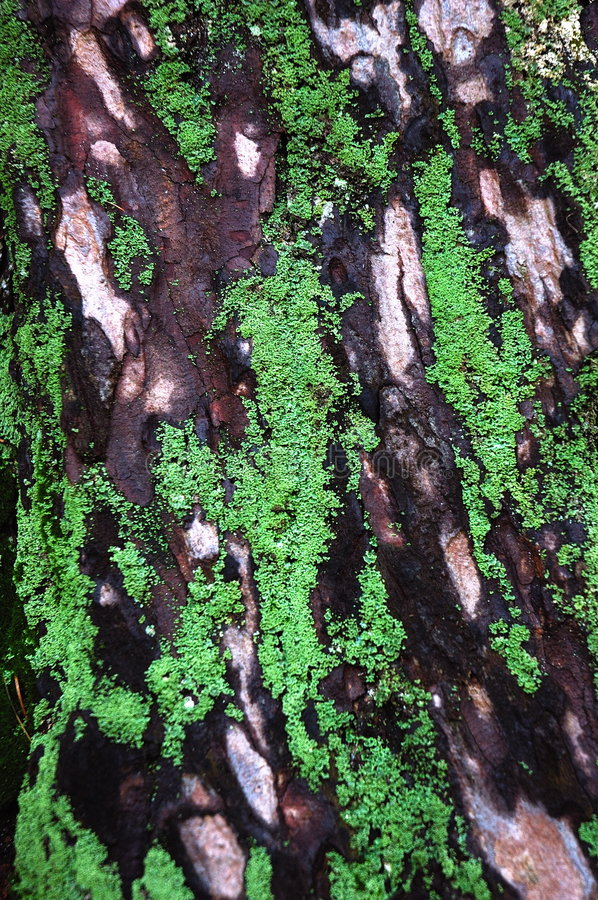 Download Bark Of An Old Tree With Lichens And Leaf Royalty Free Stock Photos - Image: 1418108