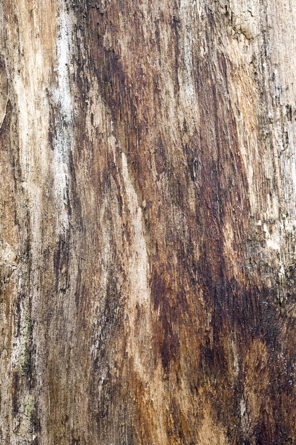 Bark. Is the outermost layers plants. It overlays the wood and consists of the inner  and the outer . The inner , which in older stems is living tissue royalty free stock image