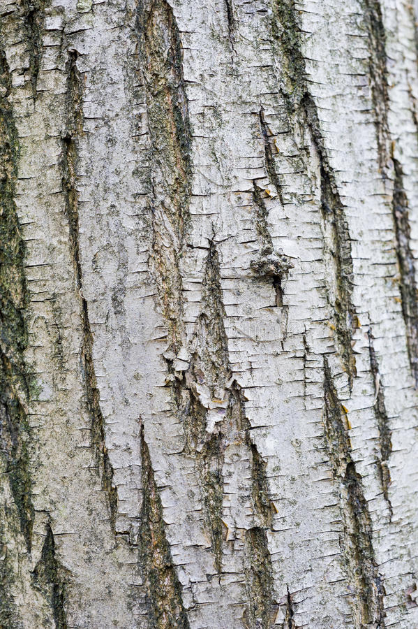 Bark. Is the outermost layers plants. It overlays the wood and consists of the inner  and the outer . The inner , which in older stems is living tissue royalty free stock photos