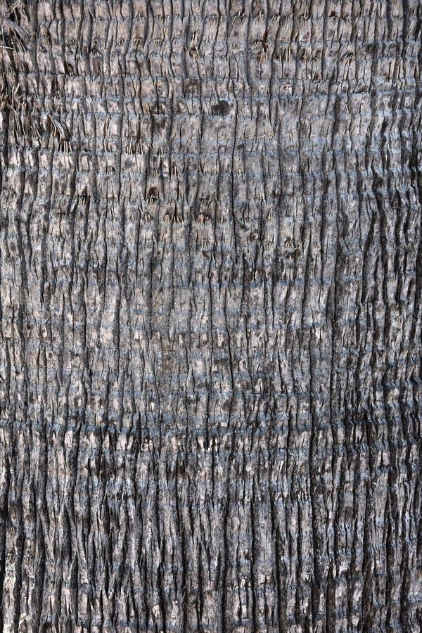 Bark of a palm tree , texture royalty free stock photos