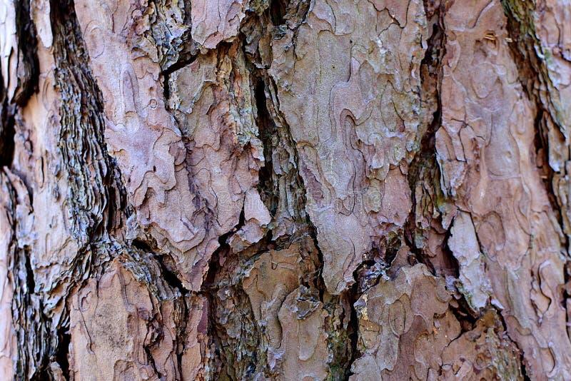Bark pine stock images