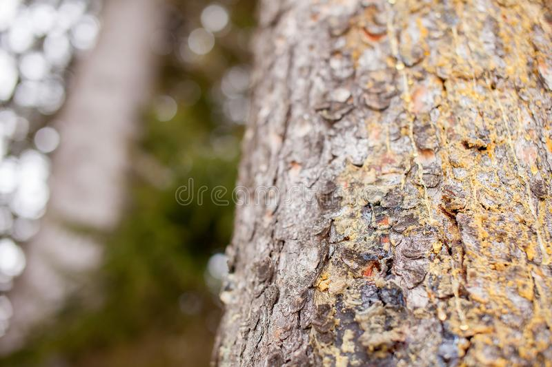 Bark of pine tree, macro. Picture with green on background stock photos