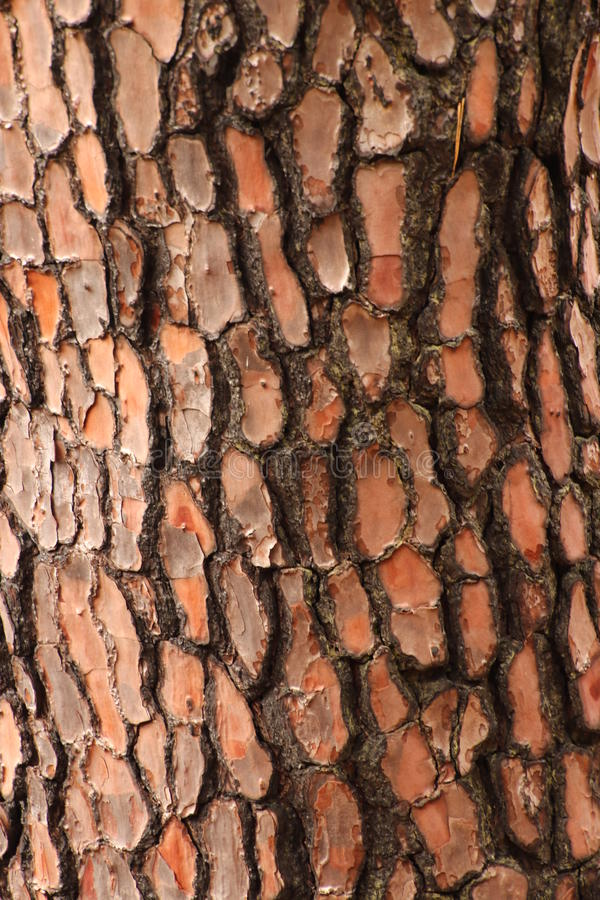 Download Bark stock image. Image of forest, shape, vertical, stem - 83720643