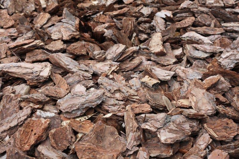 The bark of a pine tree. Shredded pine bark for mulching royalty free stock image