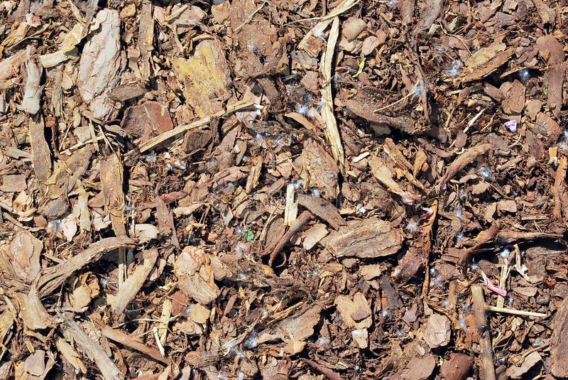 Bark. Reddish brown, decorative, ornamental pine bark, which is ideal for use in children's play areas. can also be used ,as a decorative bark mulch, to inhibit royalty free stock images